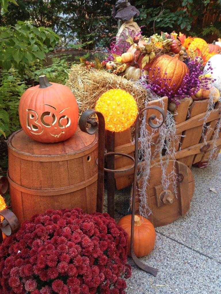 pumpkin row 10