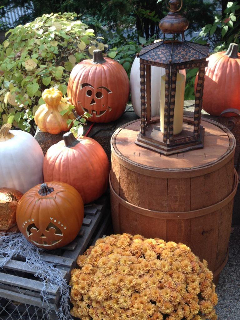 pumpkin row 3