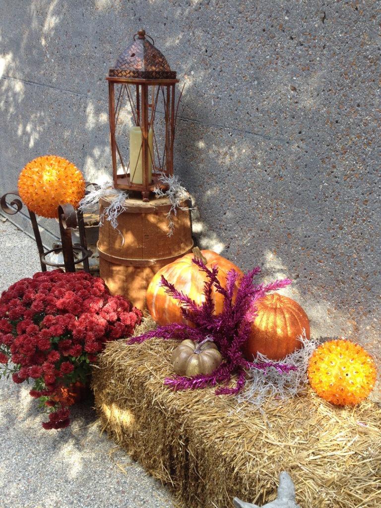 pumpkin row 7