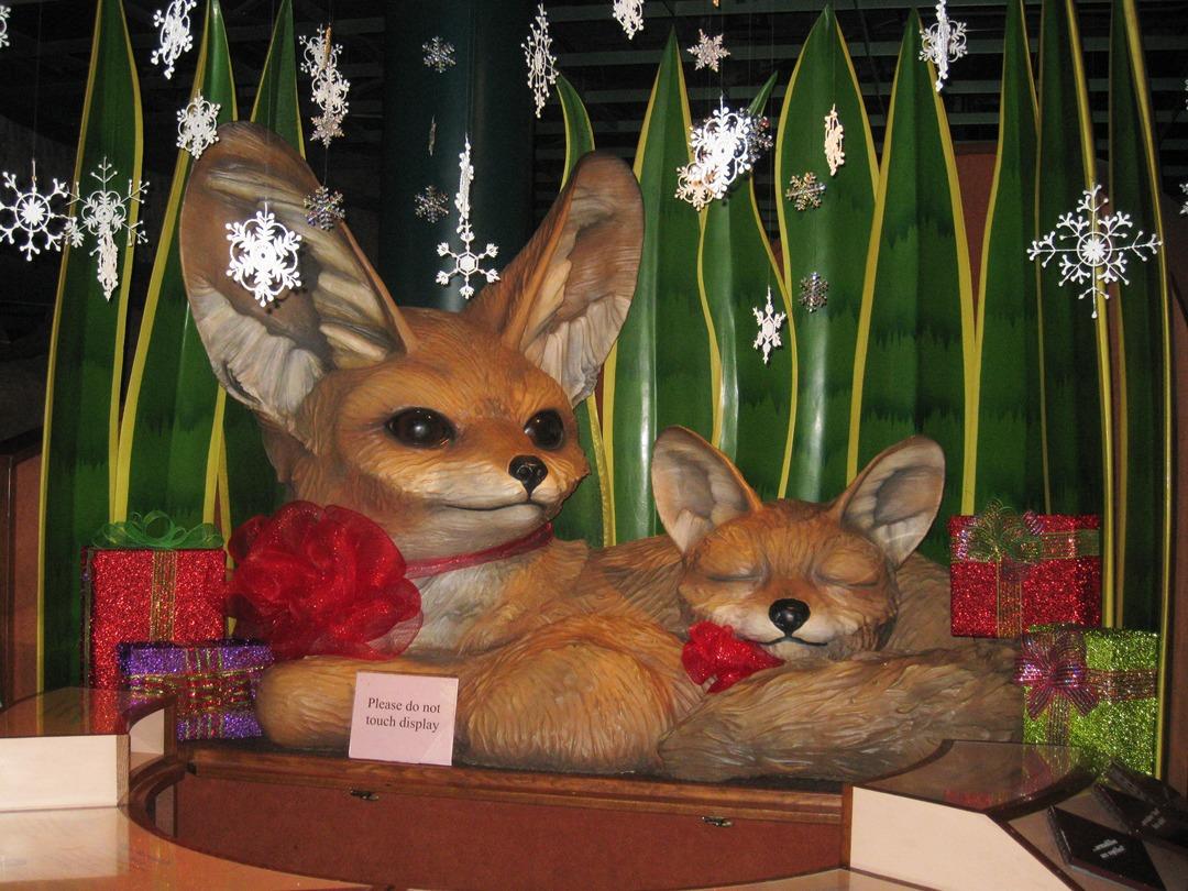 sand fox 1